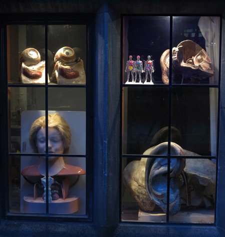 Anatomical models in window