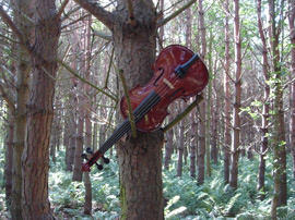 Violin in tree